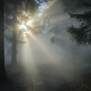 Fotografía de rayos de luz a través de los árboles. como carátula de un capítulo de A Ciencia Cierta: La luz Dualidad onda partícula