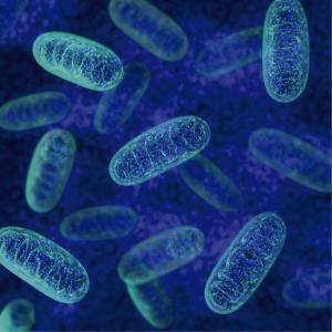 Mitocondrias simuladas por modelado 3D