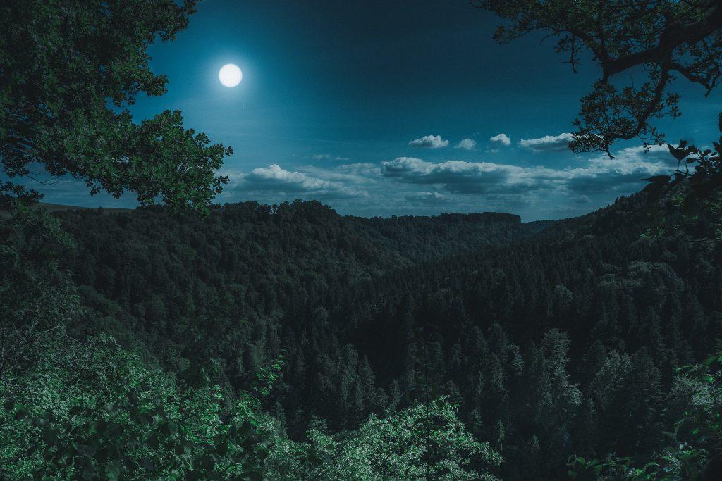 Bosque por la noche fotografía de stock