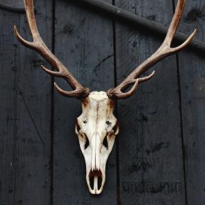 Cráneo de ciervo exhibido en una pared de madera negra como portada de: Ciervos zombis y la prensa del terror