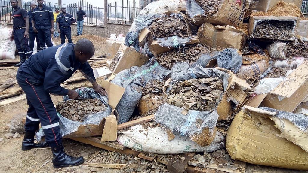 Montaña de escamas de pangolín en Camerún (fotografía de Fidelis Pegue Manga de la WFF)