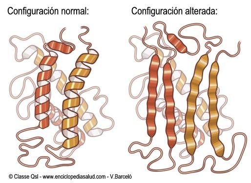 Proteína normal y prion (imagen de www.enciclopediasalud.com de V.Barceló)