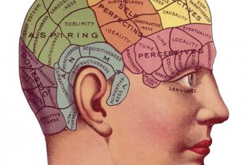 Lámina frenológica, la cual, por cierto, es una pseudociencia como carátula del episodio de La Ciencia que Viene: Mitos y verdades sobre el cerebro