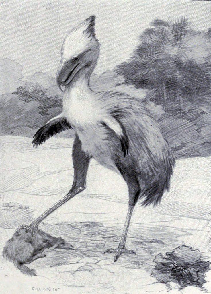 Representación de un Phorusrhacos por el paleoartista Charles R Knight en 1901