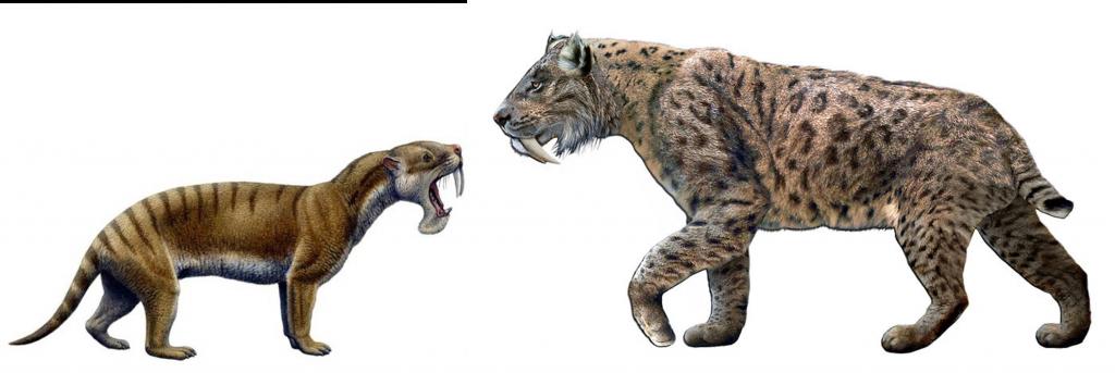 Thylacosmilus y smilodon a escala