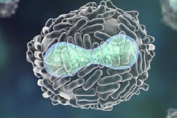 Representación tridimensional de un virus vaccina como portada del episodio de Coffee Break: Virus contra el cáncer, Higía, Arrokoth, gravitondas desconocidas y puertas lógicas cuánticas