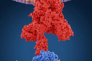 Estructura molecular de la proteína S del coronavirus y su unión a los receptores de nuestras células como carátula del episodio de A Ciencia Cierta: Mutaciones y posible evolución